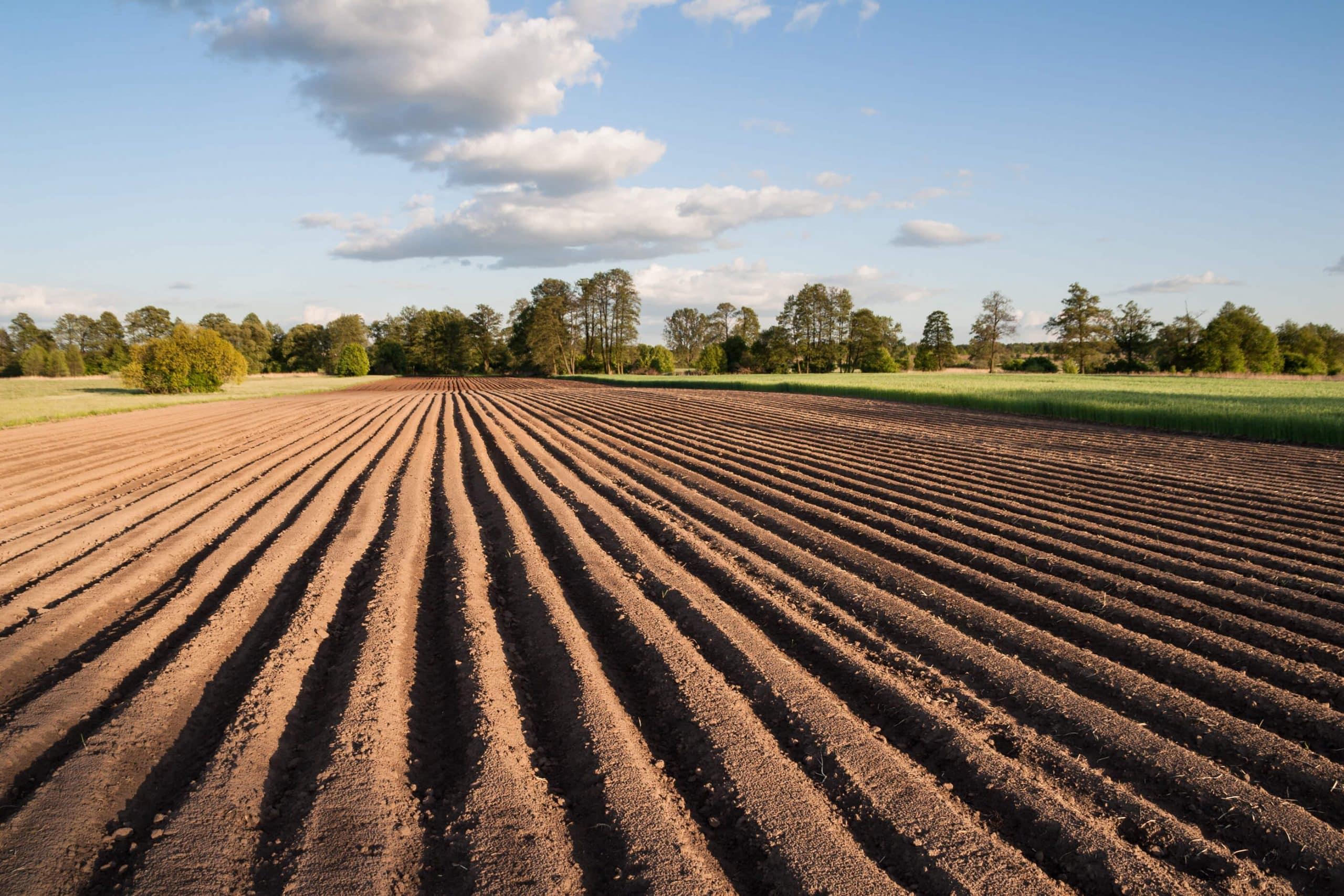 Kredyt na zakup ziemi rolnej